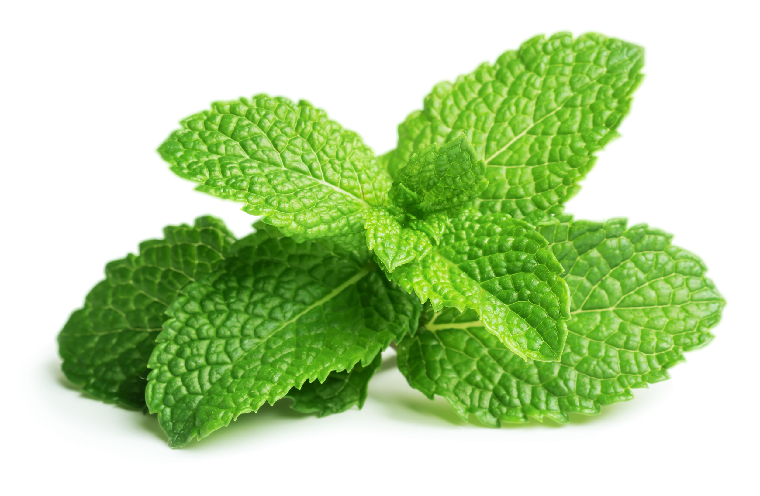 Mint leaves are used in the treatment of cold and flu symptoms, eye irritation, and nasal congestion.