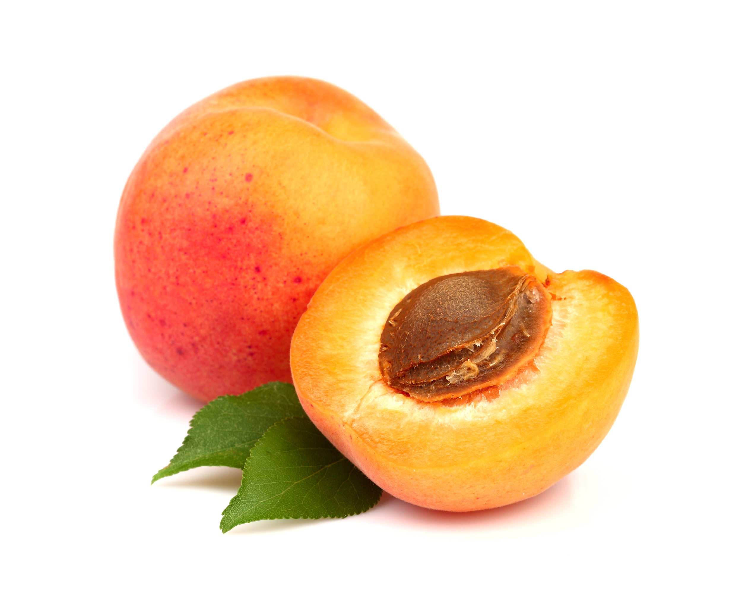 apricot large.jpg