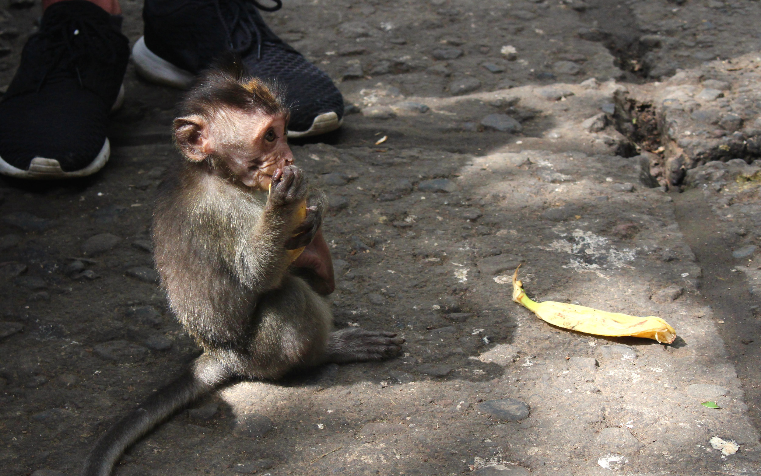 Monkey friends - this guy was in the famed monkey forest in Ubud.
