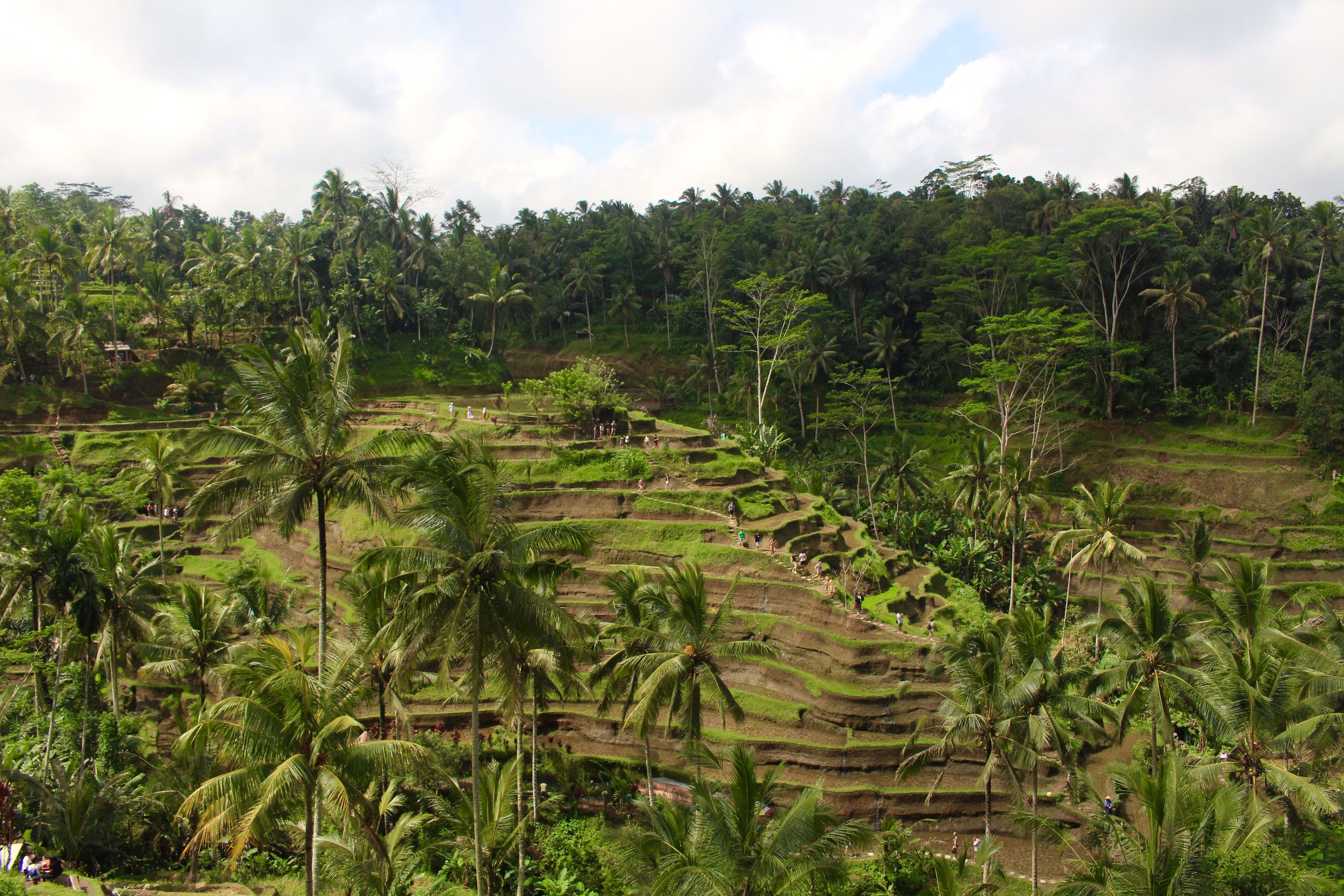 Some of the amazing rice terraces in Bali