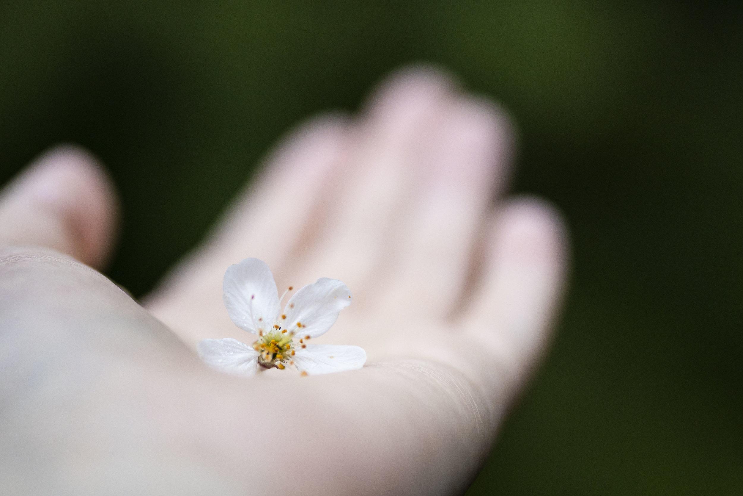 Sofia Angelina Photography Cherry Blossom