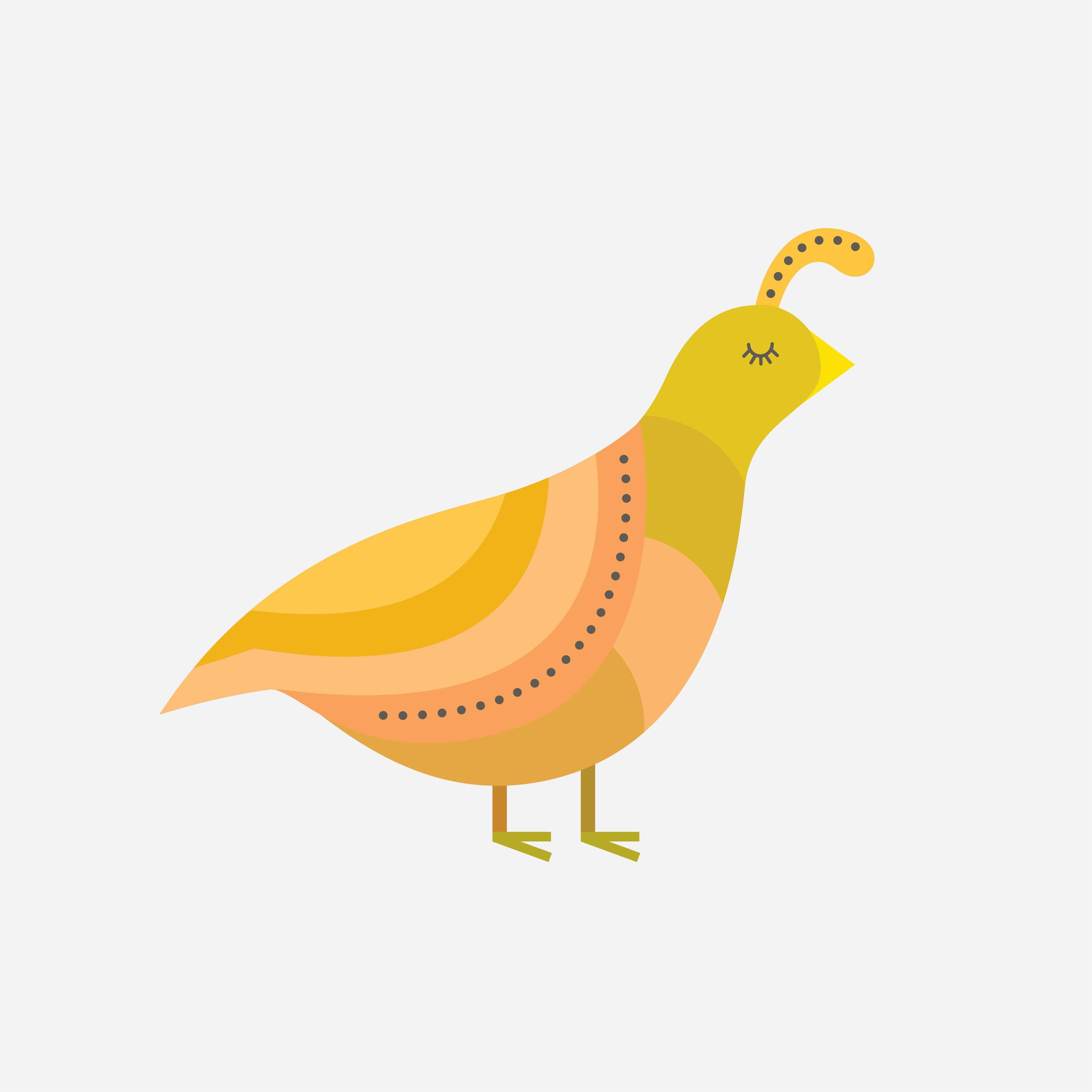 quail-43.jpg