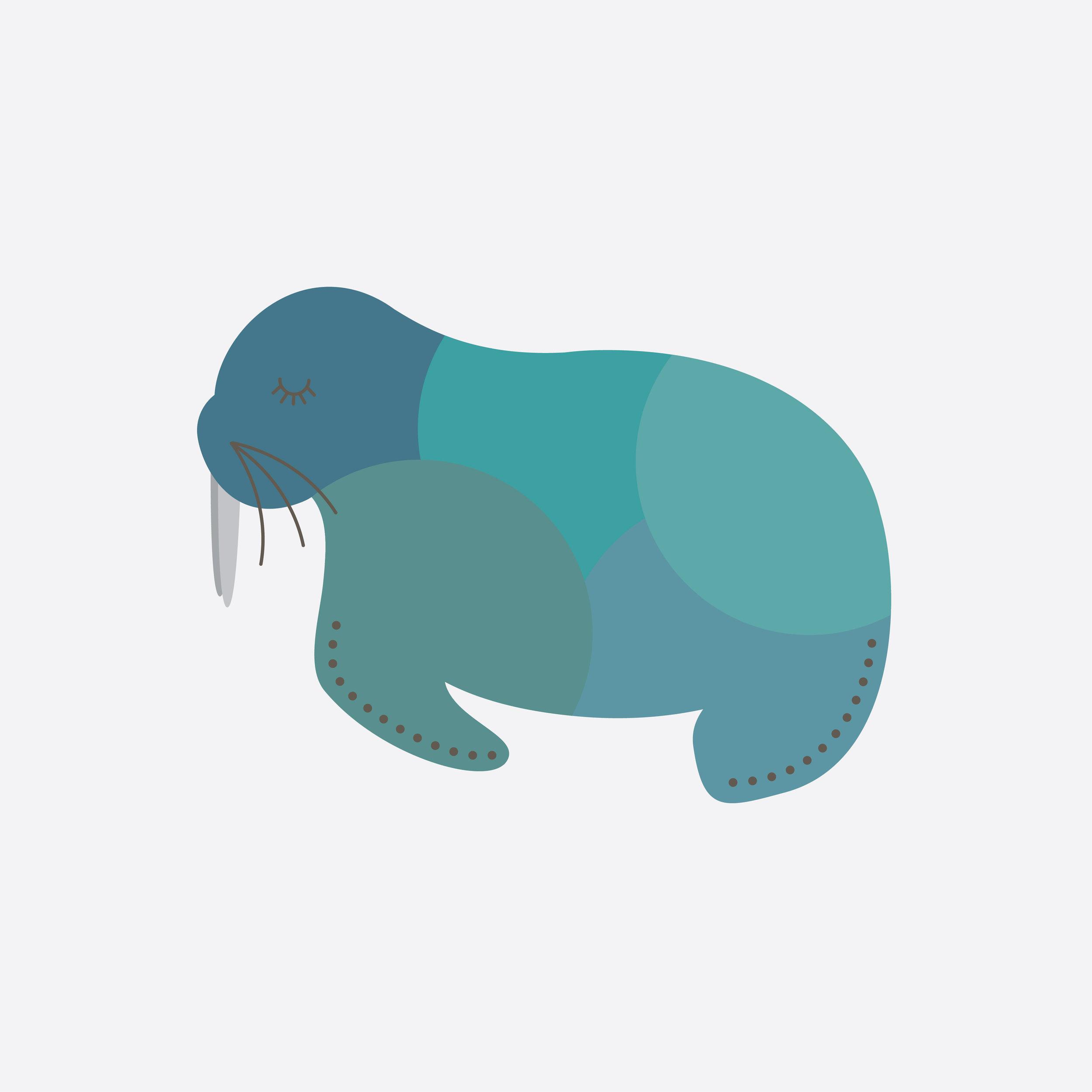 walrus-50.jpg