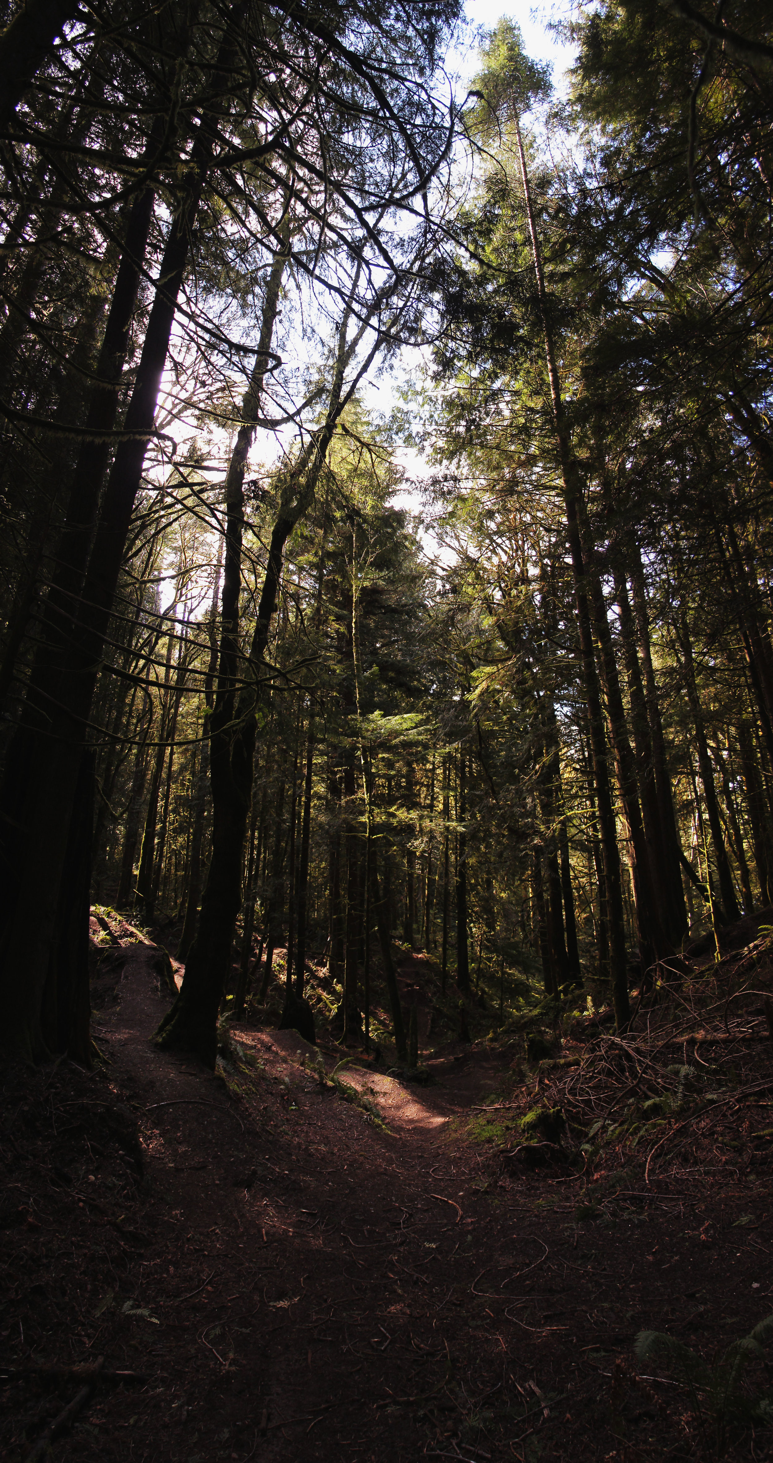 Evergreen Woods Pano1.jpg