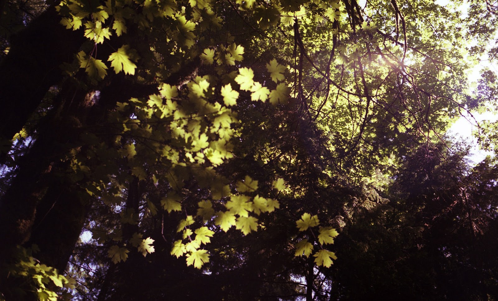 ColorFilmR3008-2.jpg