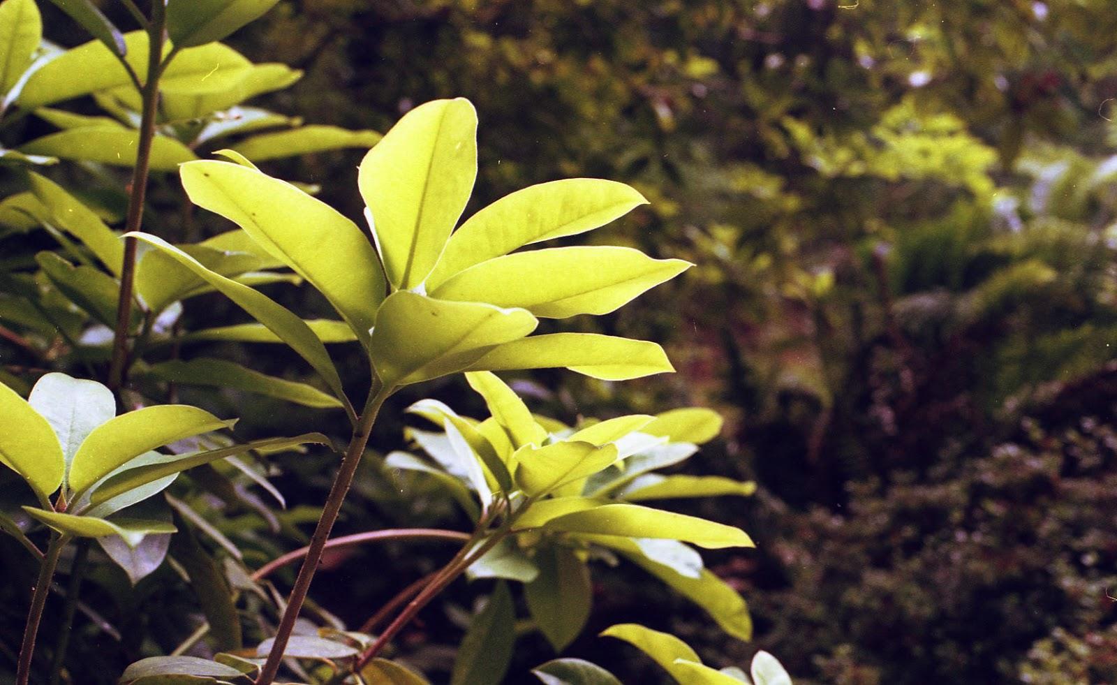 ColorFilmR3015-2.jpg