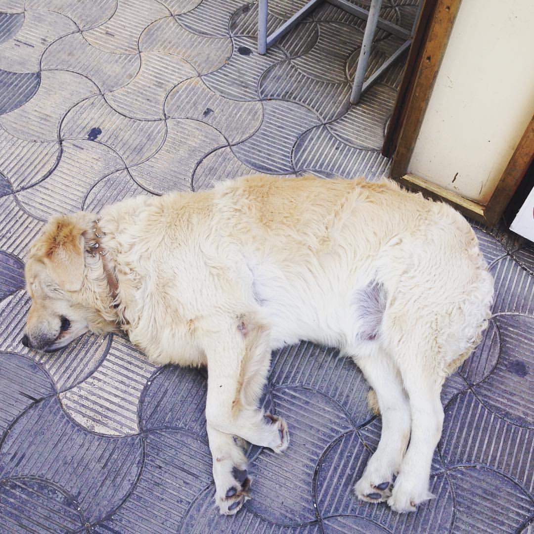 #DogsOfTurkey 😘🇹🇷🐶