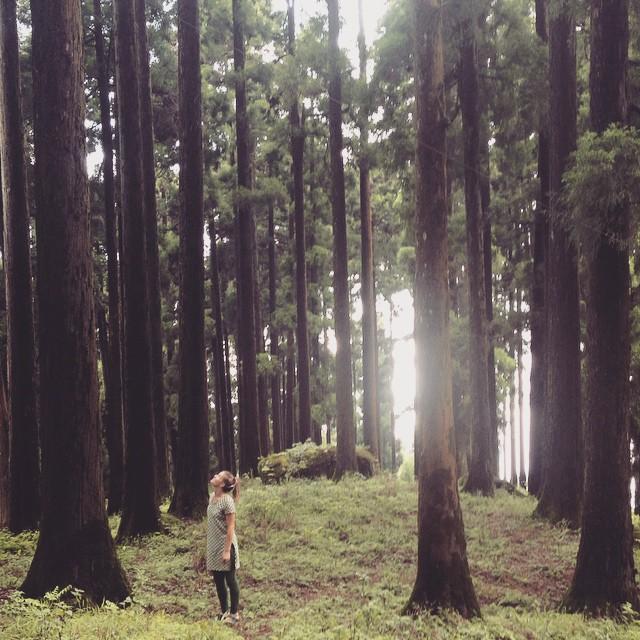 Feeling small amoung the tall wisdom 🌲👌🏽🌀 #Kurseong #IncredibleIndia.