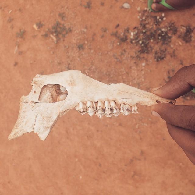 #Skeleton just chillin in the school yard. 💀 #Incredibleindia