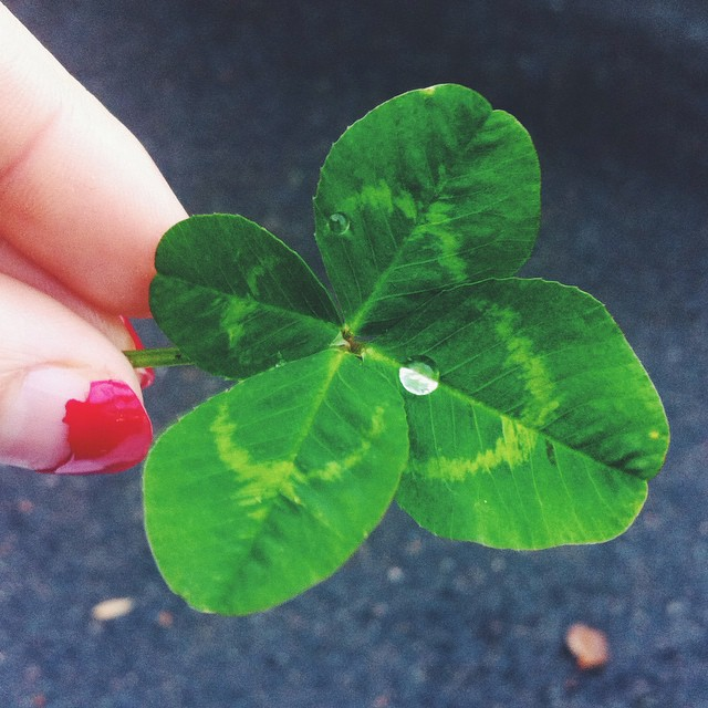 Everything is good 👌🍀🙏 #fourleafclover #lucky #notactuallyluck