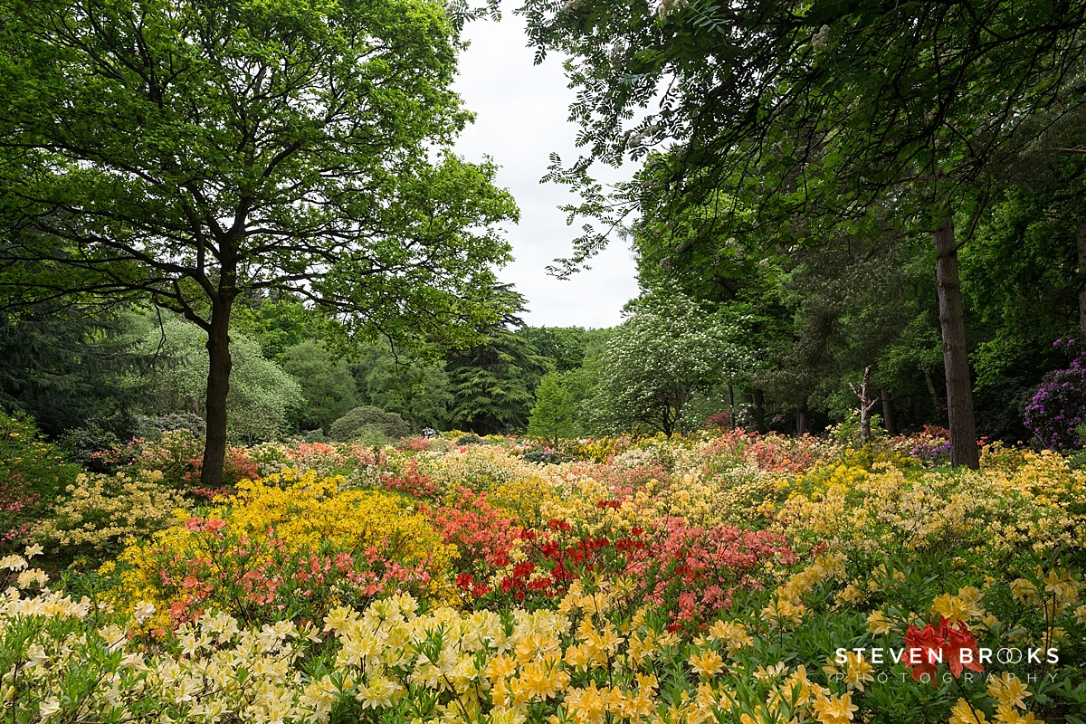 The Stunning Azalea Water Gardens at Stody LodGe