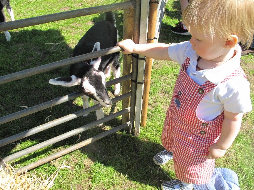 rsz_child_goat.jpg