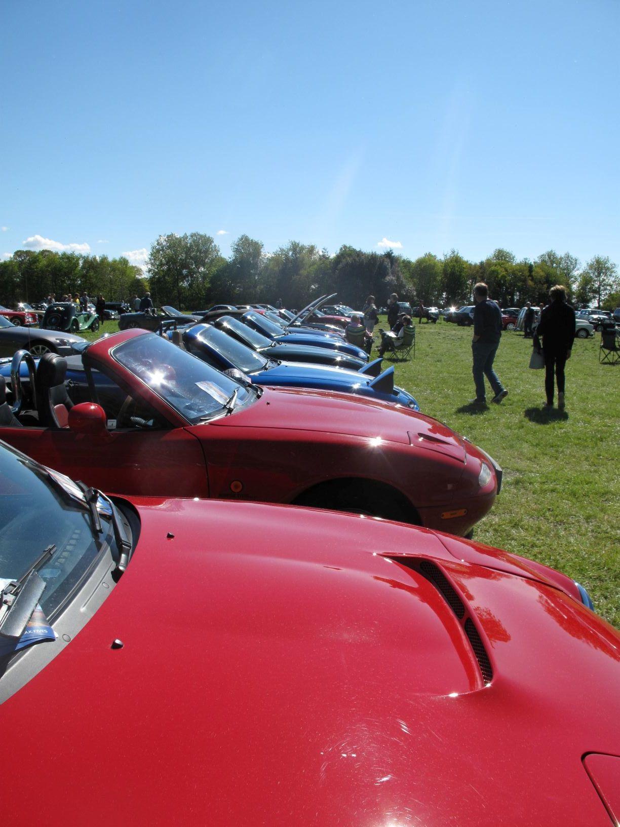 Line of car bonnets_low res.JPG