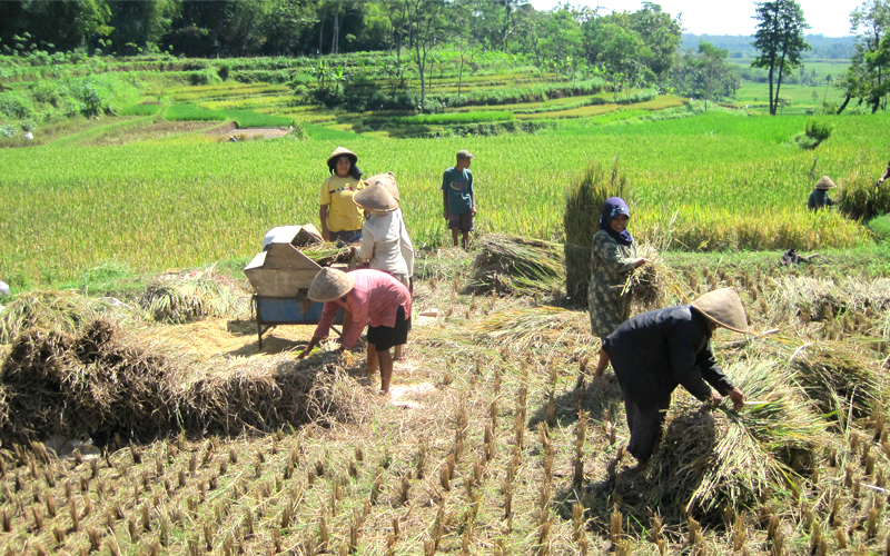 Rice-gallery-01.jpg