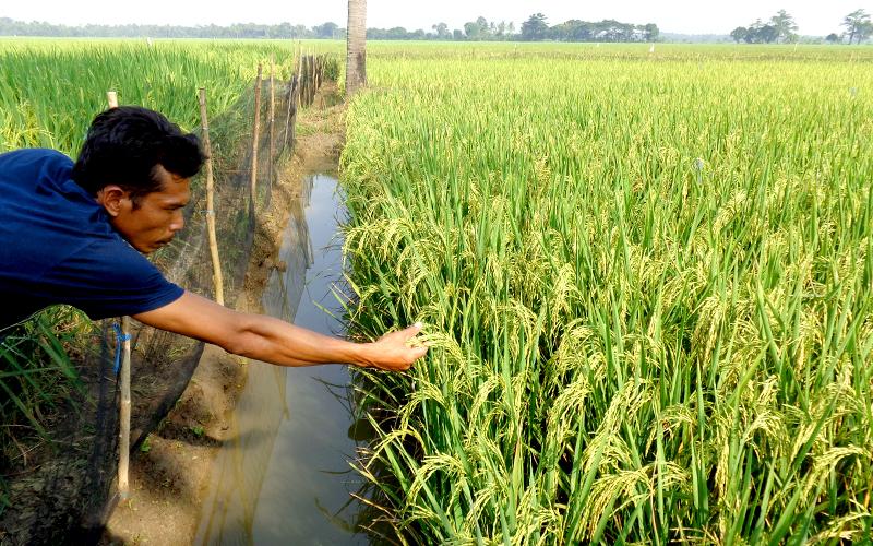 Rice-gallery-04.jpg