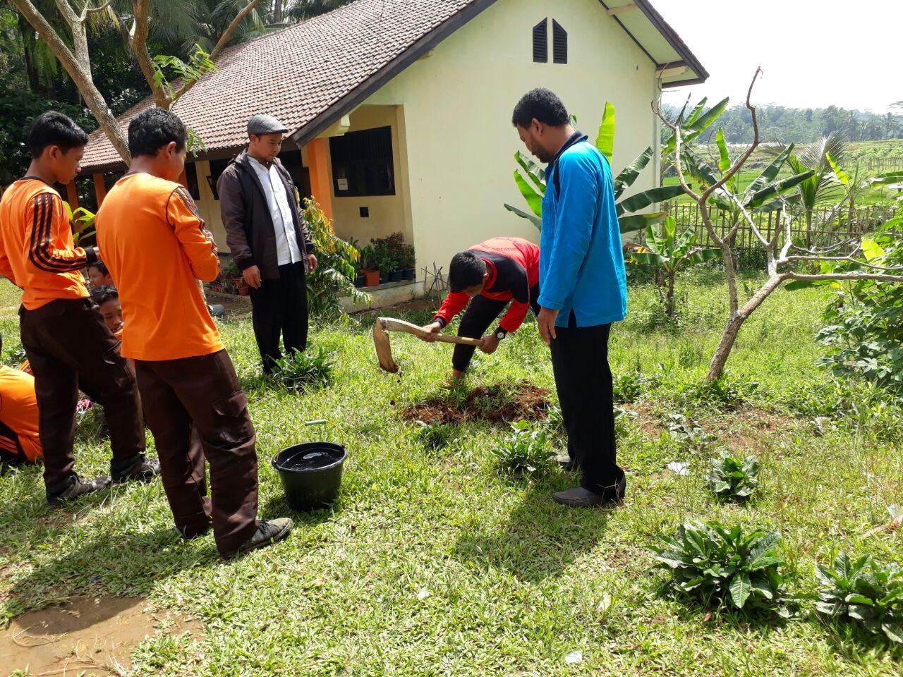 Planting the seedlings.