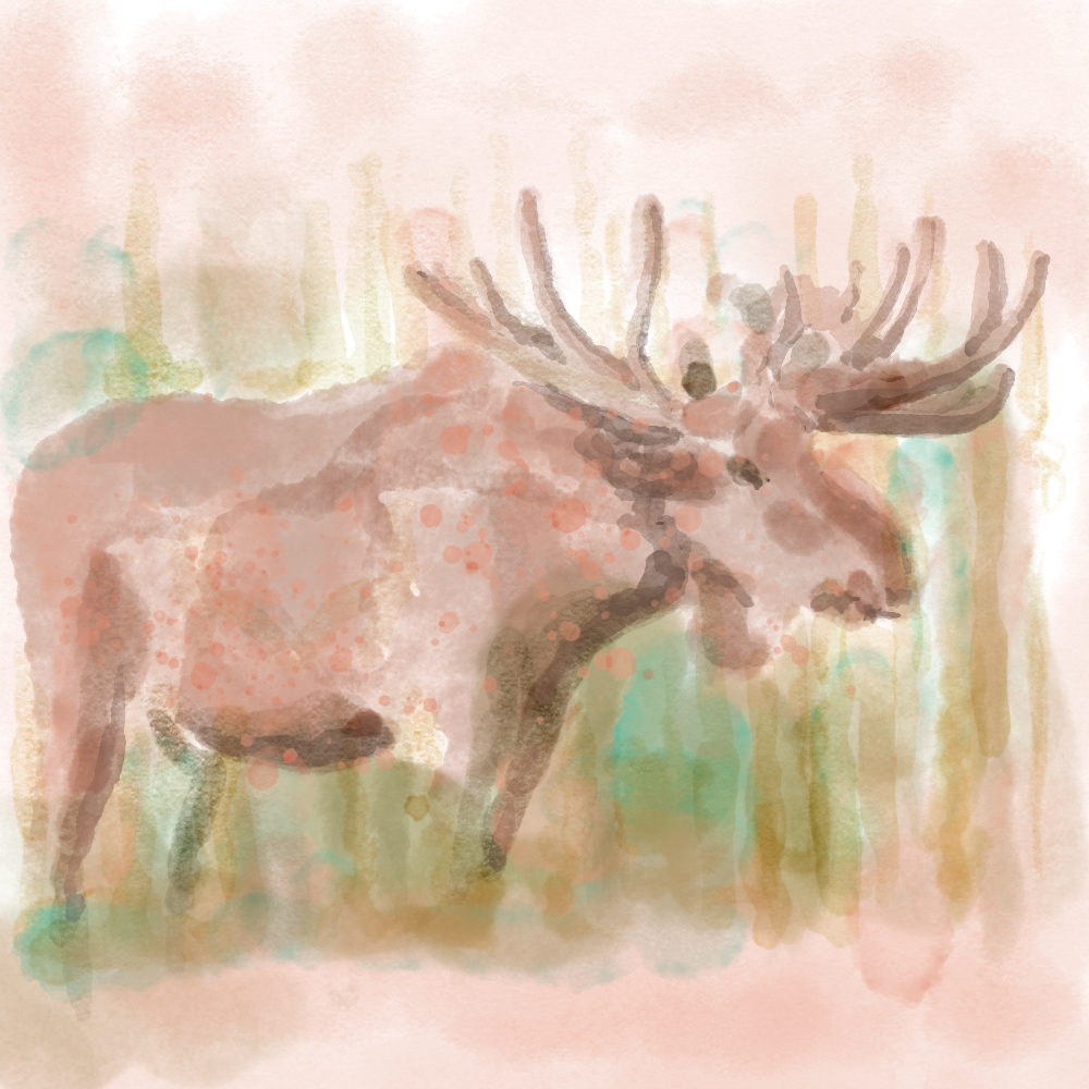 Mooose-watercolour.jpg