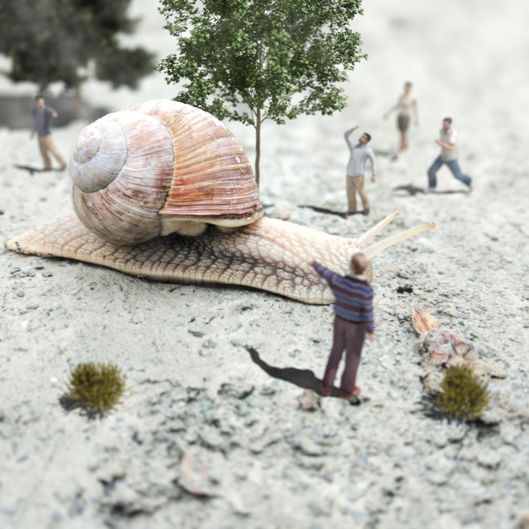 Snail comp.jpg