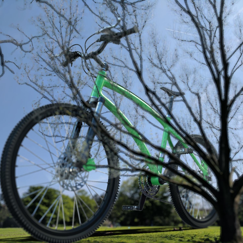tree bikesq.jpg