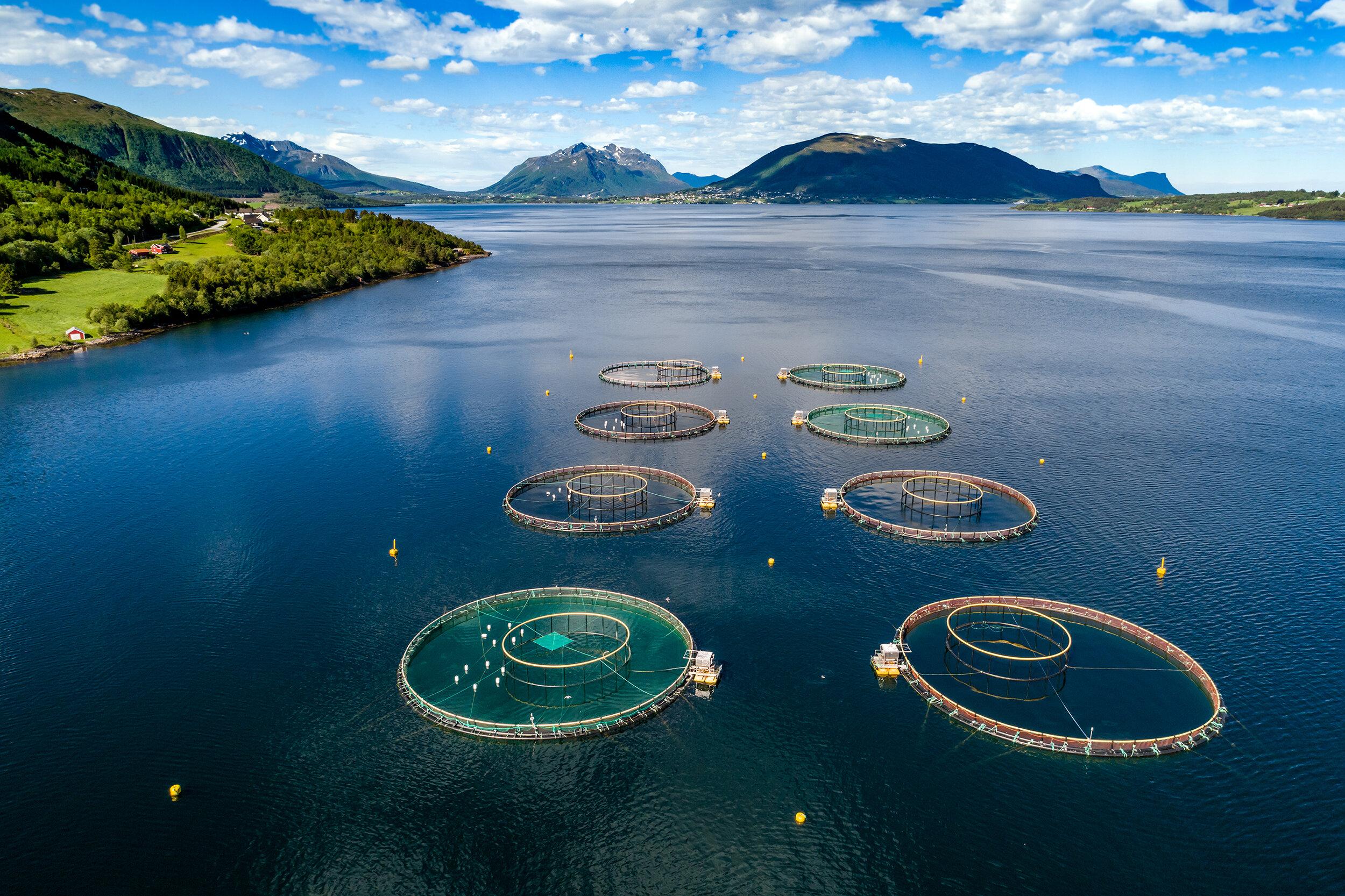 Farm-salmon-fishing-Aerial-FPV-drone-photography.-862270944_3002x2000_lav.jpg