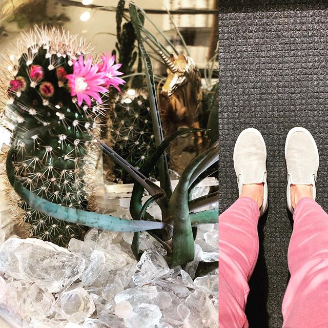 I'm feeling a connection with this cactus flower today..We made it through winter! Ahhhhh 🌸