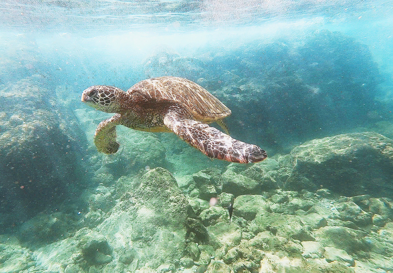 maui travel guide. snorkeling with turtles at black rock.