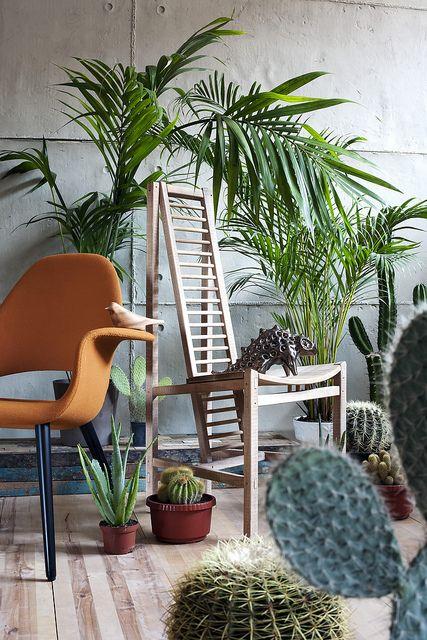 The Areca Palm