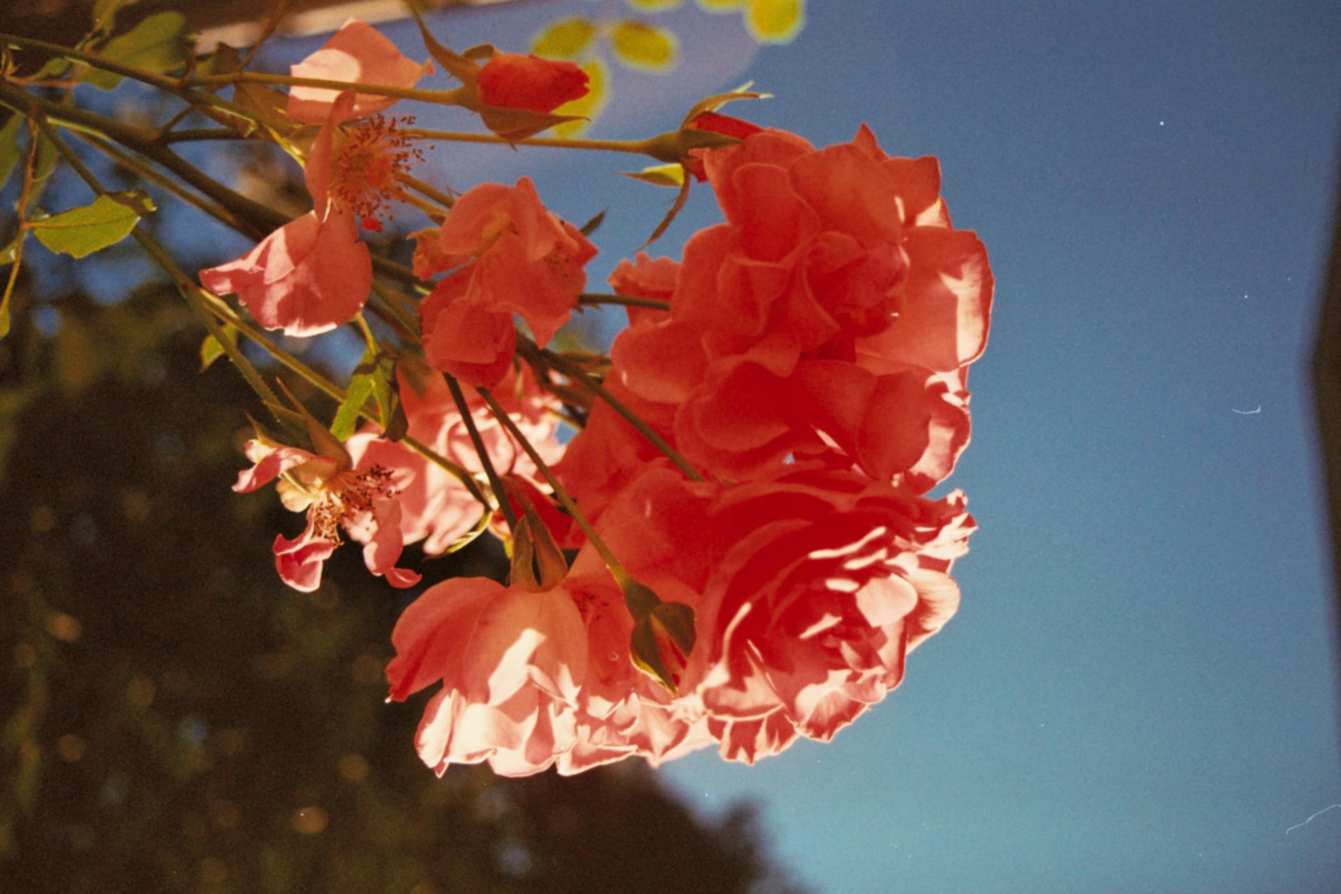 Flower in the sky.jpg
