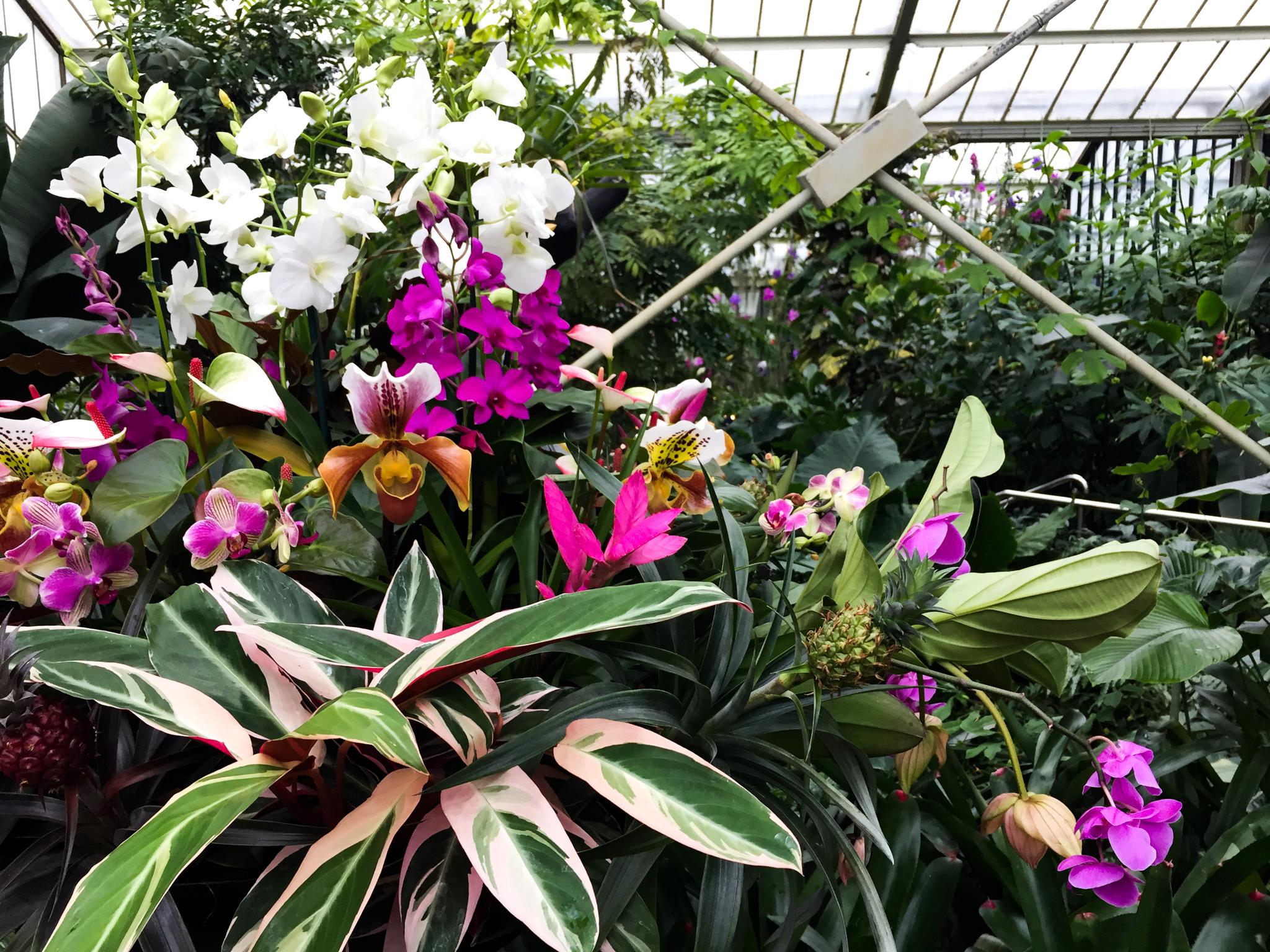 Exploring London: The Orchids Festival At Kew Gardens | Sea of Atlas