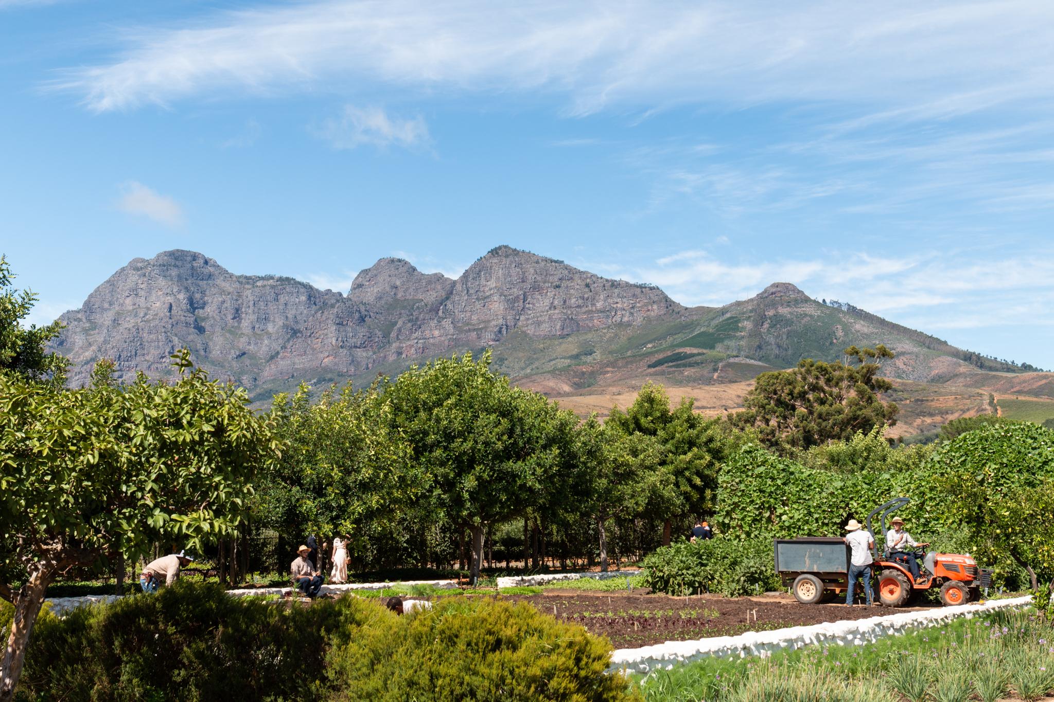 Babylonstoren | South Africa | Ciao Fabello