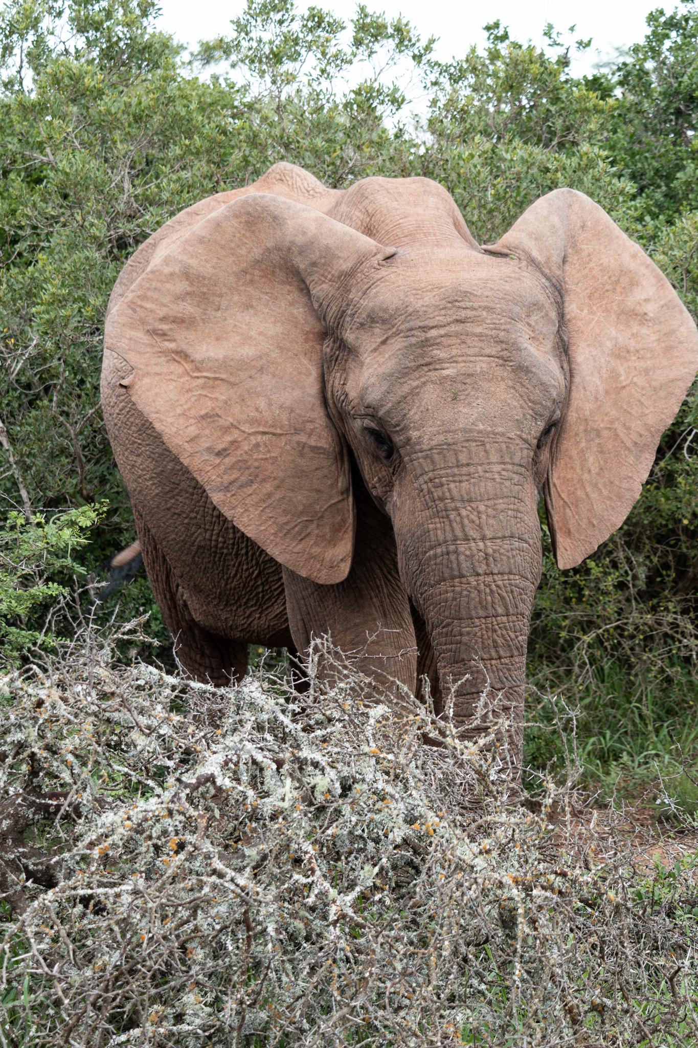 Addo National Elephant Park | South Africa | Ciao Fabello