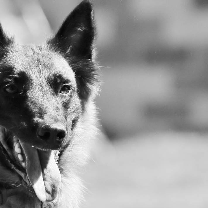 Dog Obedience Training.jpg