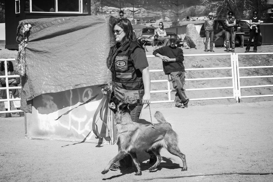 Competition Dog Training.jpg