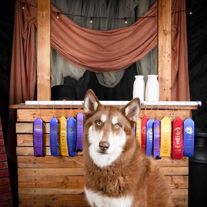 Advanced Obedience - Training for AKC, IPO, & Ringsport
