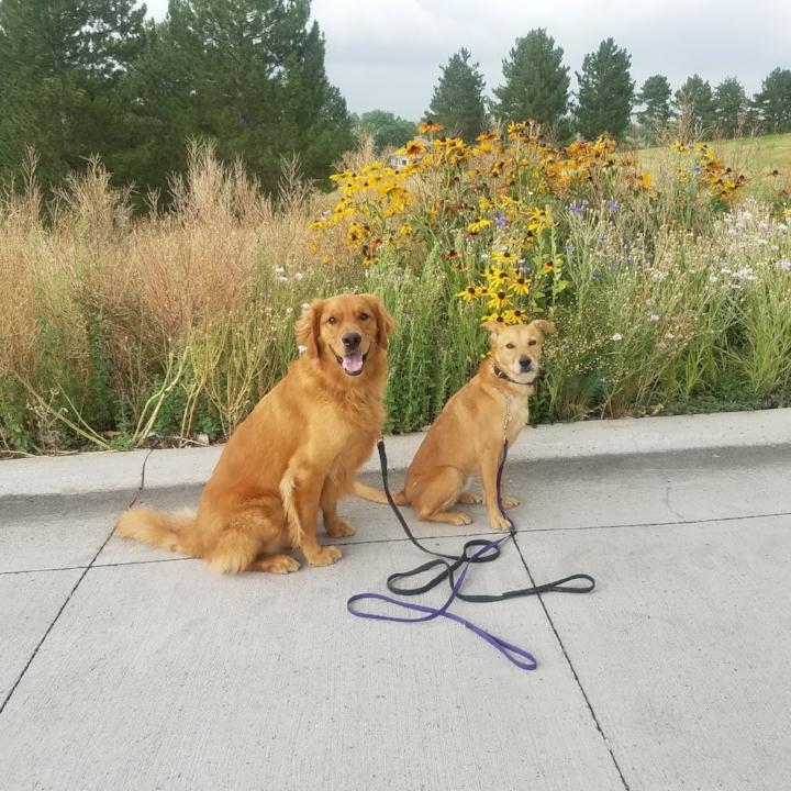 Day Training - For Dog Dynamix alumni