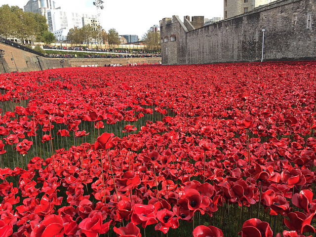 Poppies in the Moat, 2014, (Image (cc-by) Neil Thomson)