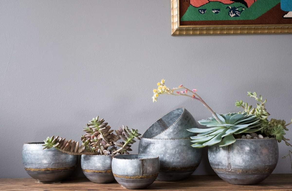Succulents and Bowls