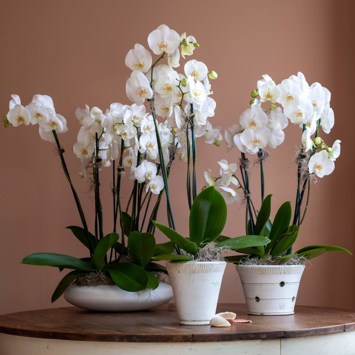 Potted Orchid Trio