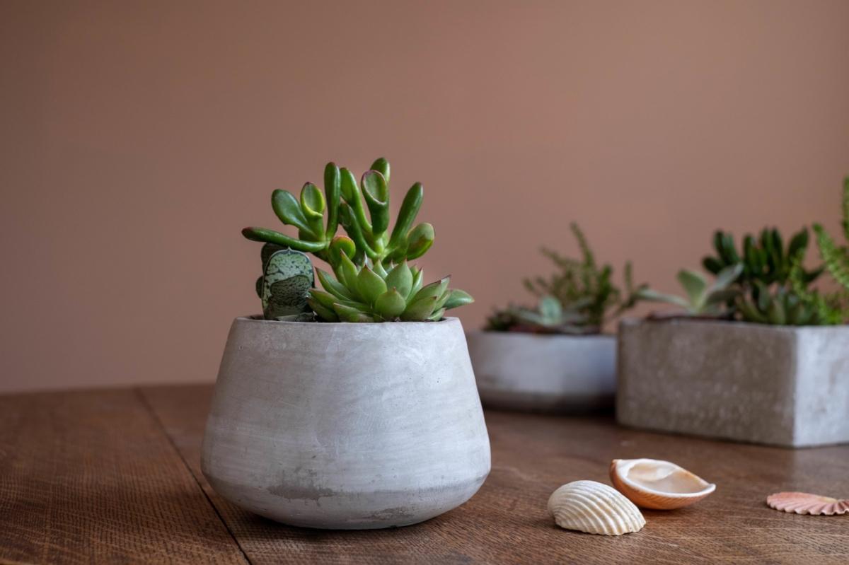 Succulent Planter Trio