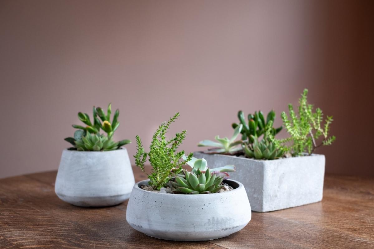 Succulent Garden Trio 2