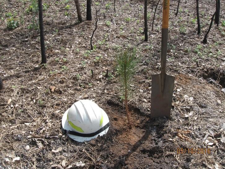 Seedling Planted - Lumpkin Fire.jpg