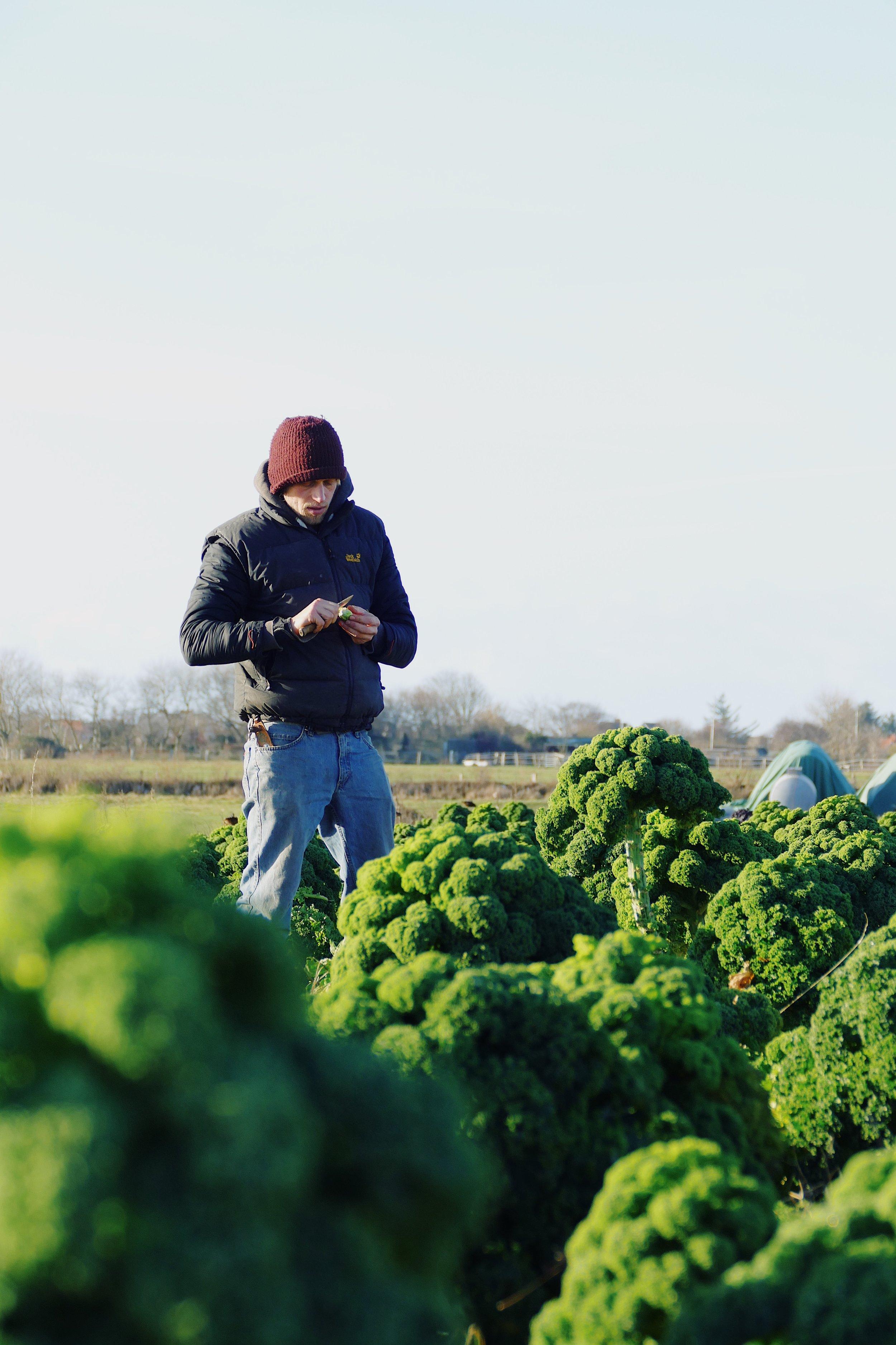 (c) Julz // Qualitätskontrolle vor Ort: Zwischen dem Grünkohl wächst der Rosenkohl.