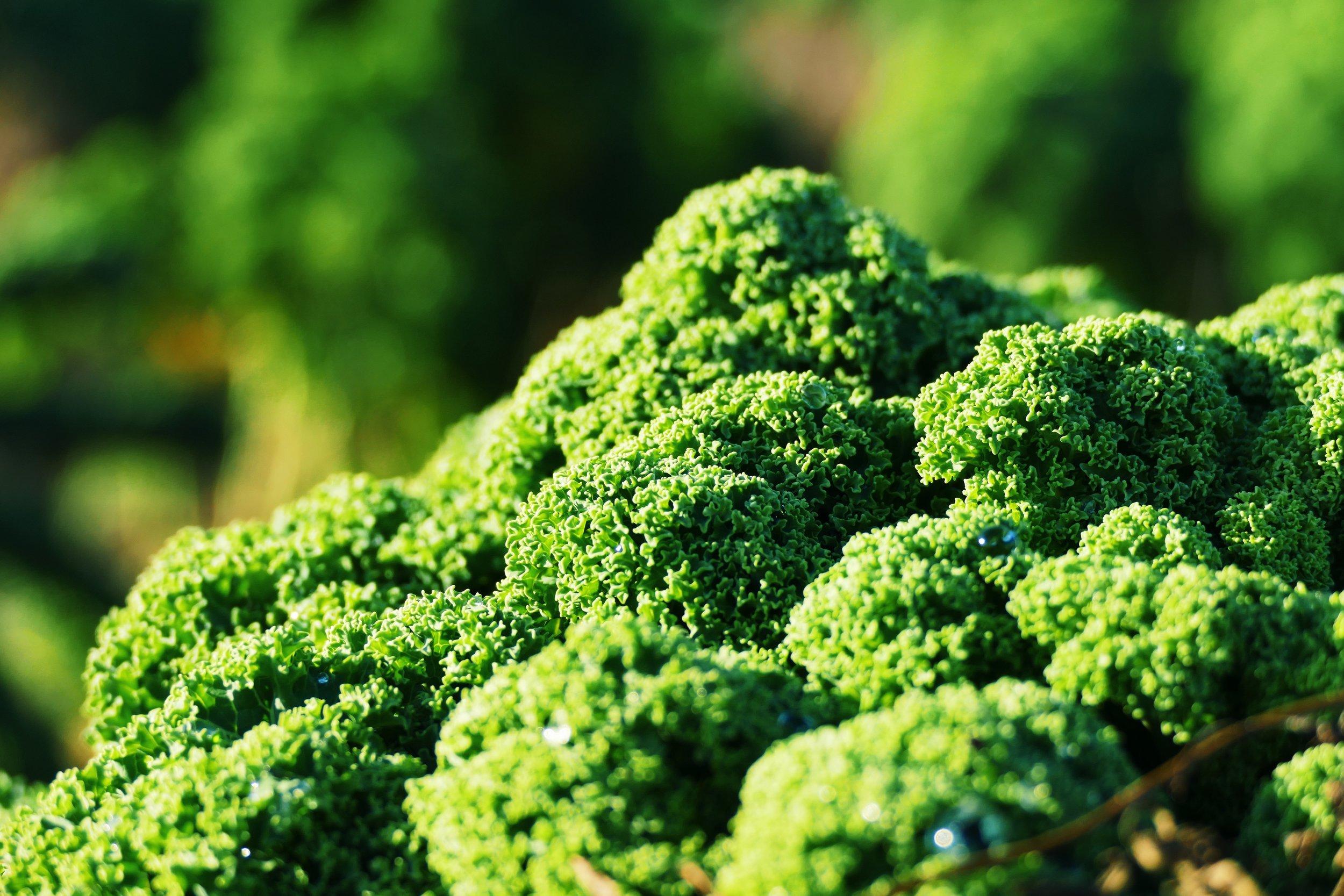 (c) Julz // Grün und knackig, so muss er sein. Die in der Sonne schmelzenden Schneetropfen geben ihm den besonderen Frischekick.