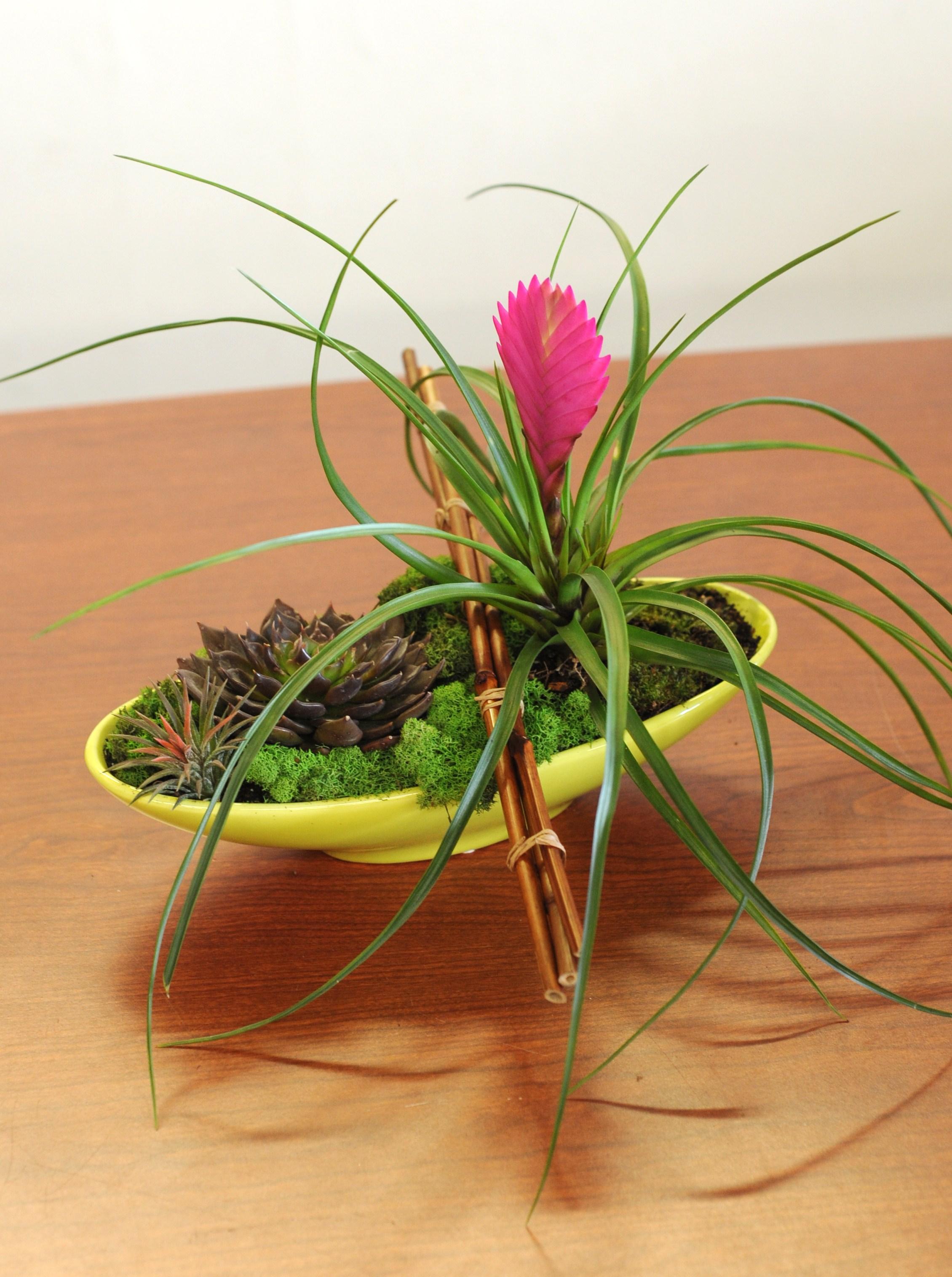 Harding Botanicals. Ikebana