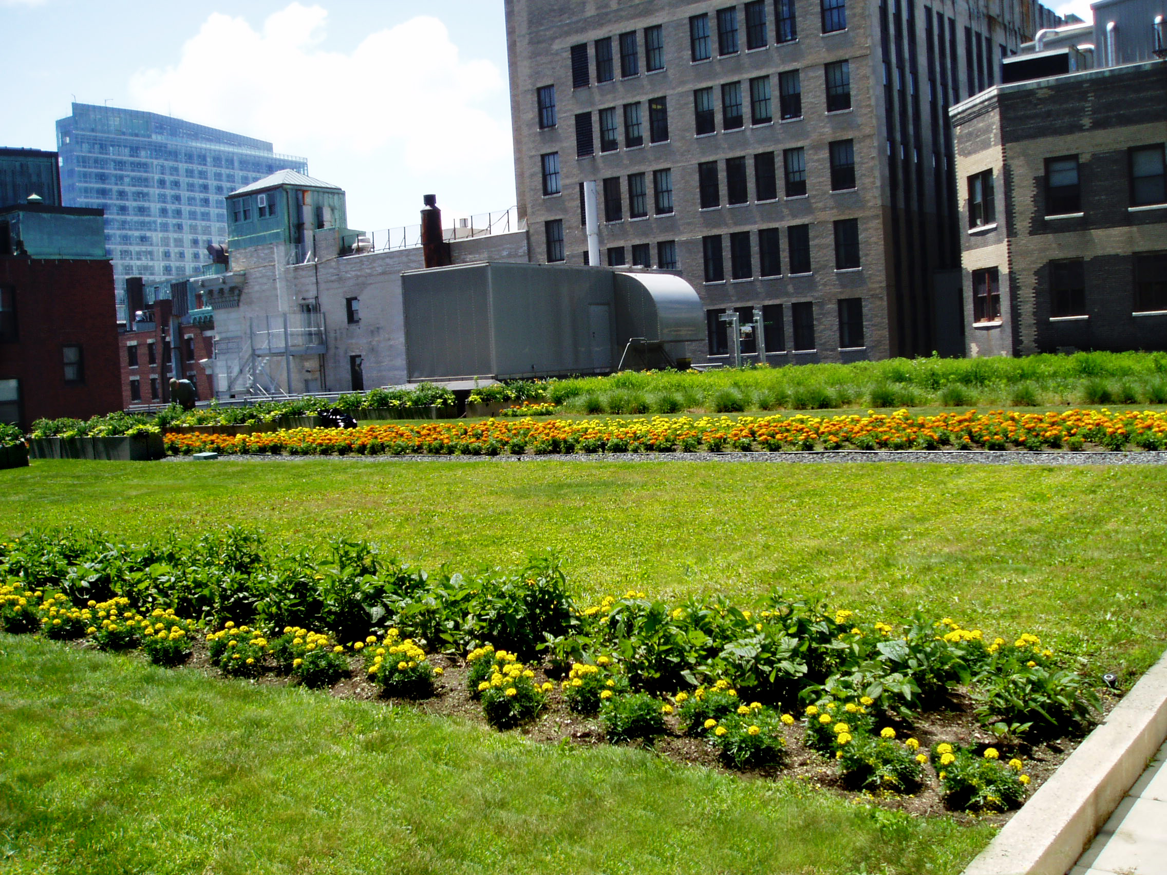 Harding Botanicals. Roof Garden. Boston