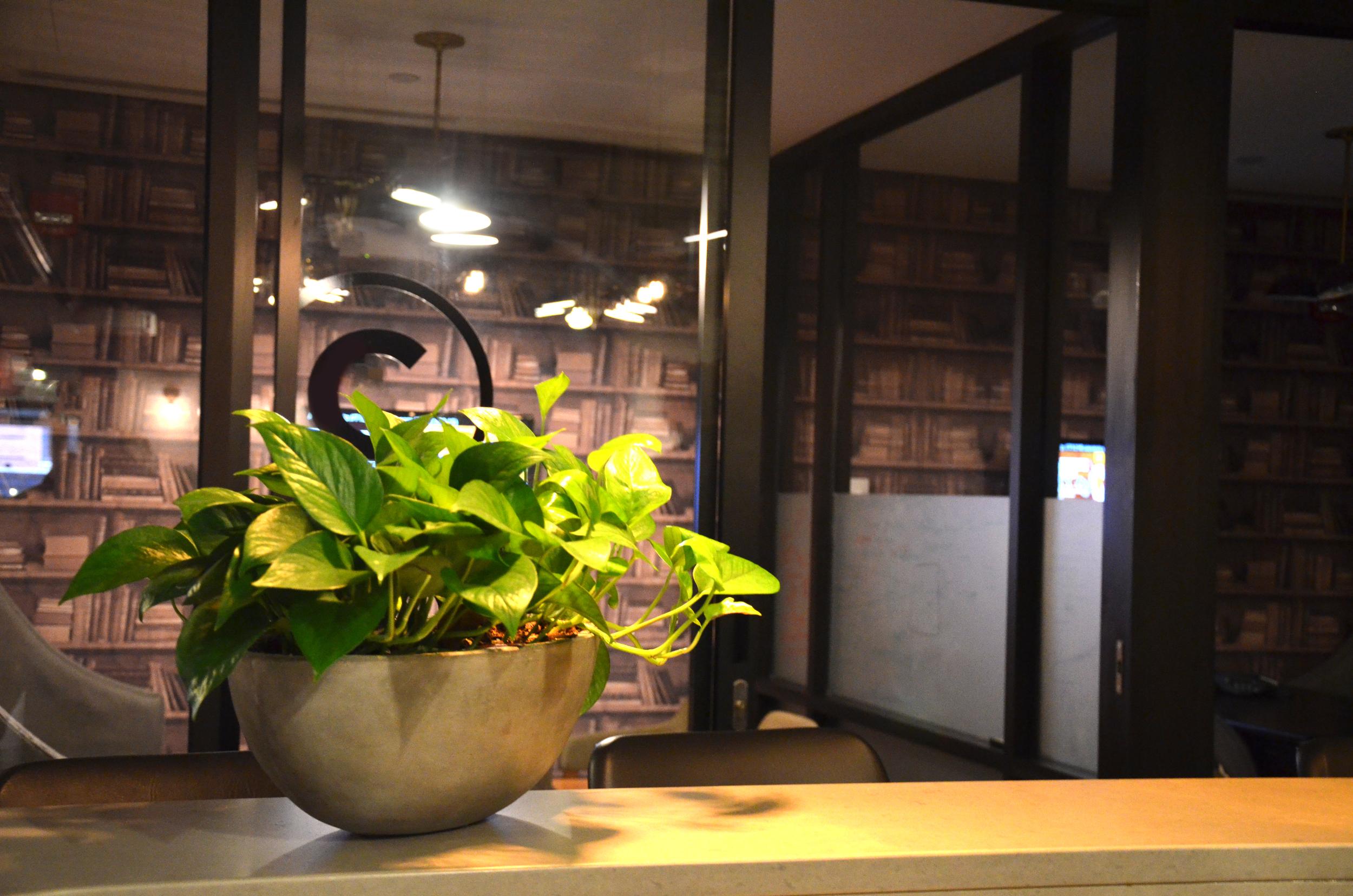 Neon Pothos. Harding Botanicals. We Work Boston