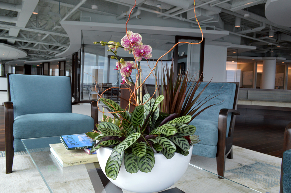 Harding Botanicals. Boston Office Orchids. Orchids