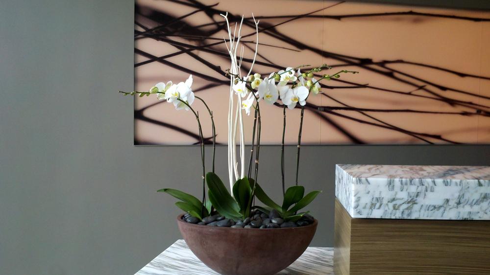 Harding Botanicals. White Orchids