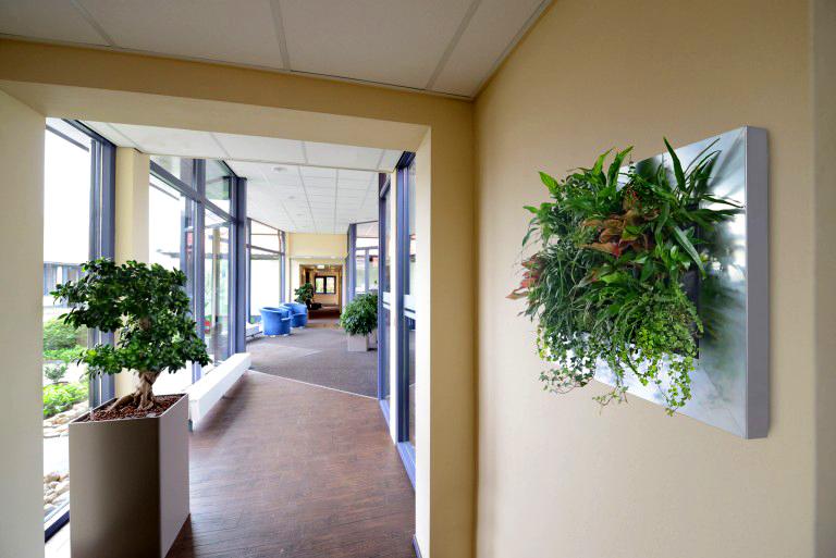 Suite Plants. Van Grow. Harding Botanicals