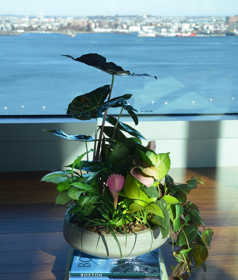 Harding Botanicals. Colorbowl. Boston Harbor